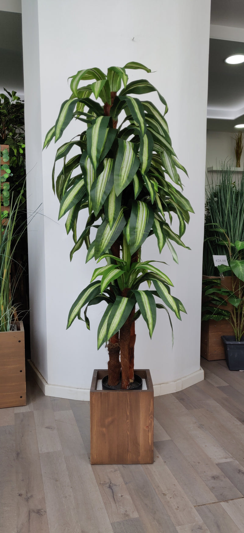 Artificial Dracaena (Height: 150cm) - AL2923