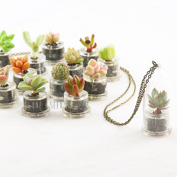 Assorted Mini Succulent Dome - Soul Made Boutique