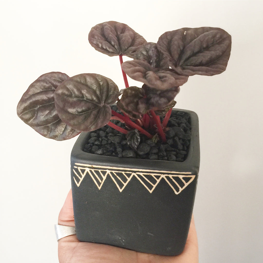 Collector's Plant Geometry Cube Pot - Soul Made Boutique
