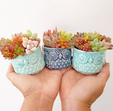 Assorted Succulent Garden Owl Pot