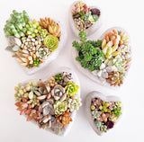 Assorted Succulent Garden Concrete Heart