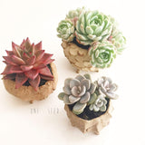 Collector's Succulent Plant Concrete Pot - Soul Made Boutique