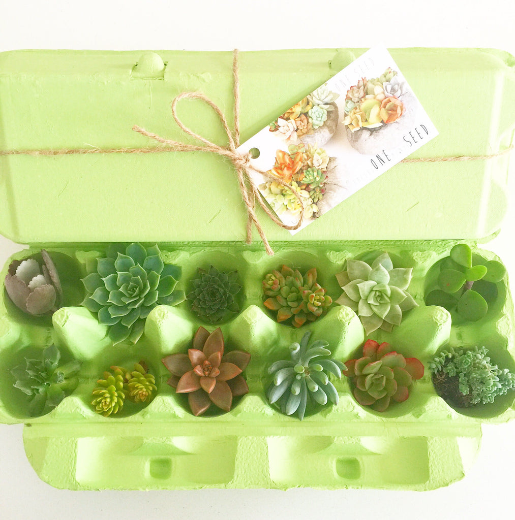 Little Green Box (June)