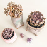 Collector's Succulent Plant Small Pastel Pot
