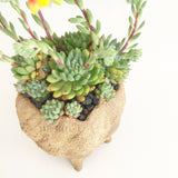 Collector's Succulent Plant Stoneware Pot - Soul Made Boutique