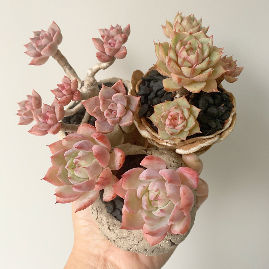 Beautiful Blooms in Handmade Footed Pots
