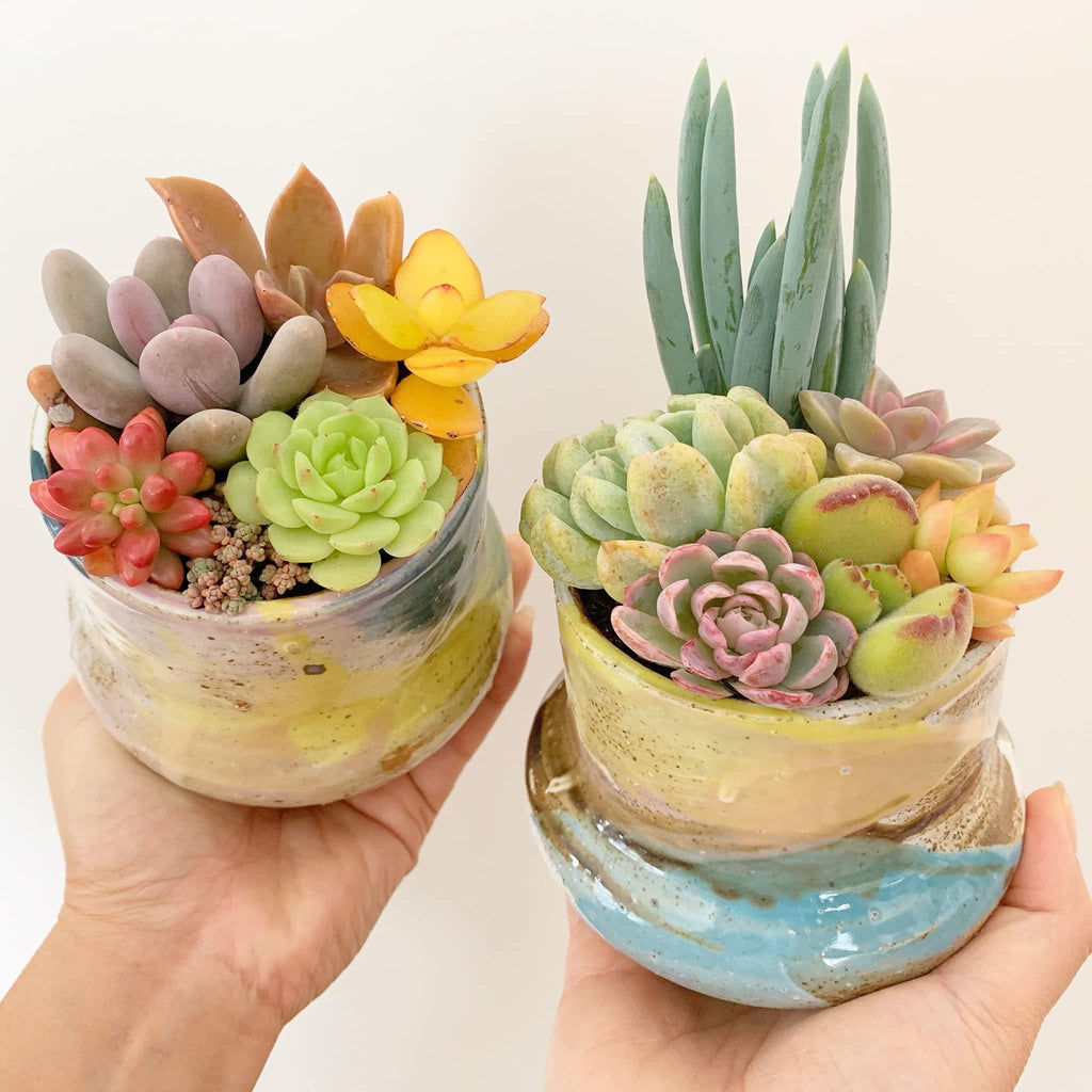Assorted Succulent Garden Colourful Hand Painted Pot