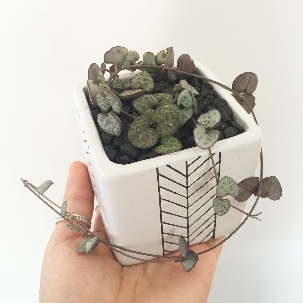 Collector's Succulent Plant Geometry Cube Pot - Soul Made Boutique