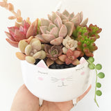 Assorted Succulent Garden Kitty Pot - Soul Made Boutique