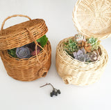Assorted Succulent Cuttings (Regular) Gift Basket - Soul Made Boutique
