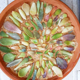 Assorted Succulent Leaves - Soul Made Boutique