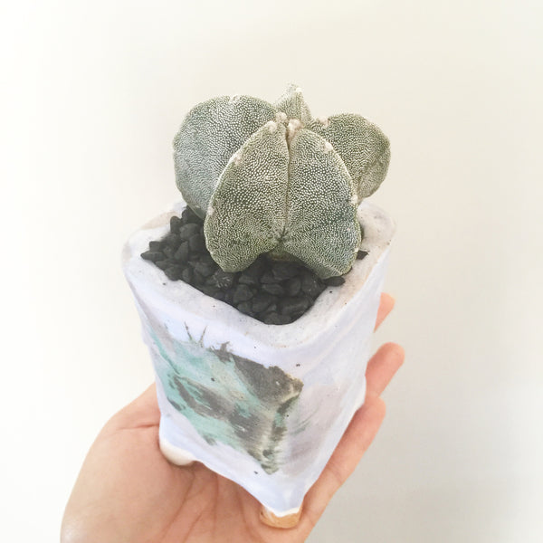 Collector's Succulent Plant Handmade Watercolour Pot