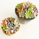 Adorable Footed Pot Garden Arrangement or Kit