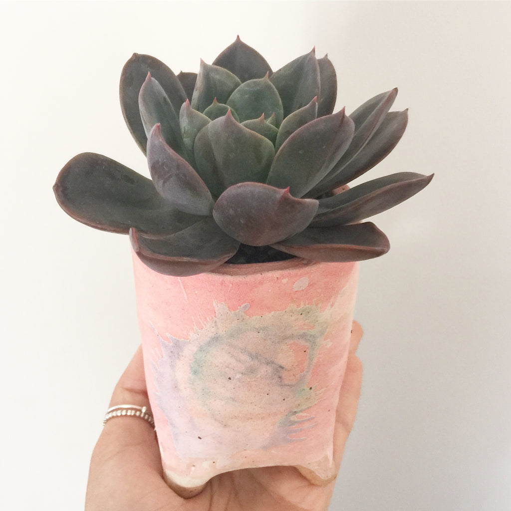 Collector's Succulent Plant Handmade Watercolour Pot - Echeveria Purple Princess