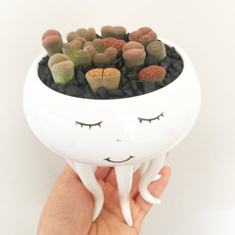 Assorted Lithop Garden Octopus Pot