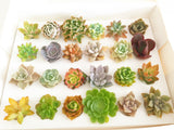 Assorted Succulent Plants White Basket - Soul Made Boutique