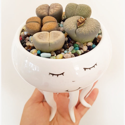 Assorted Lithop Garden Octopus Pot - Poppy