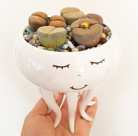 Assorted Lithop Garden Octopus Pot - Lou