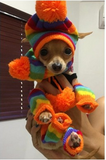 Rainbow Striped Hat Scarf and Sock for small dog