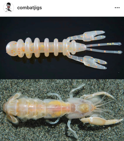 Hellcraw Ghost Shrimp
