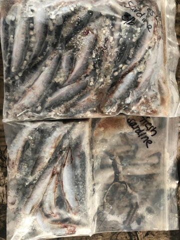 LP Fishing Supply Fresh Frozen Sardine Bait