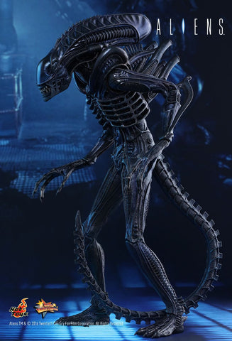 "Alien - Alien Warrior 12"" 1:6 Scale Action Figure"