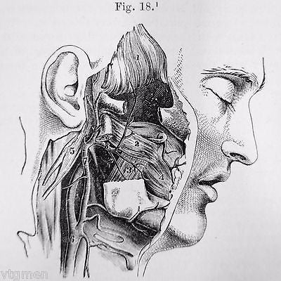 Antique 1879 Anatomy Dissection Medical Book by Ellis, 249 Anatomy Illustrations