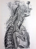 Antique 1893 Anatomy Dissections Medical Book by Heath, 329 Engravings on Wood