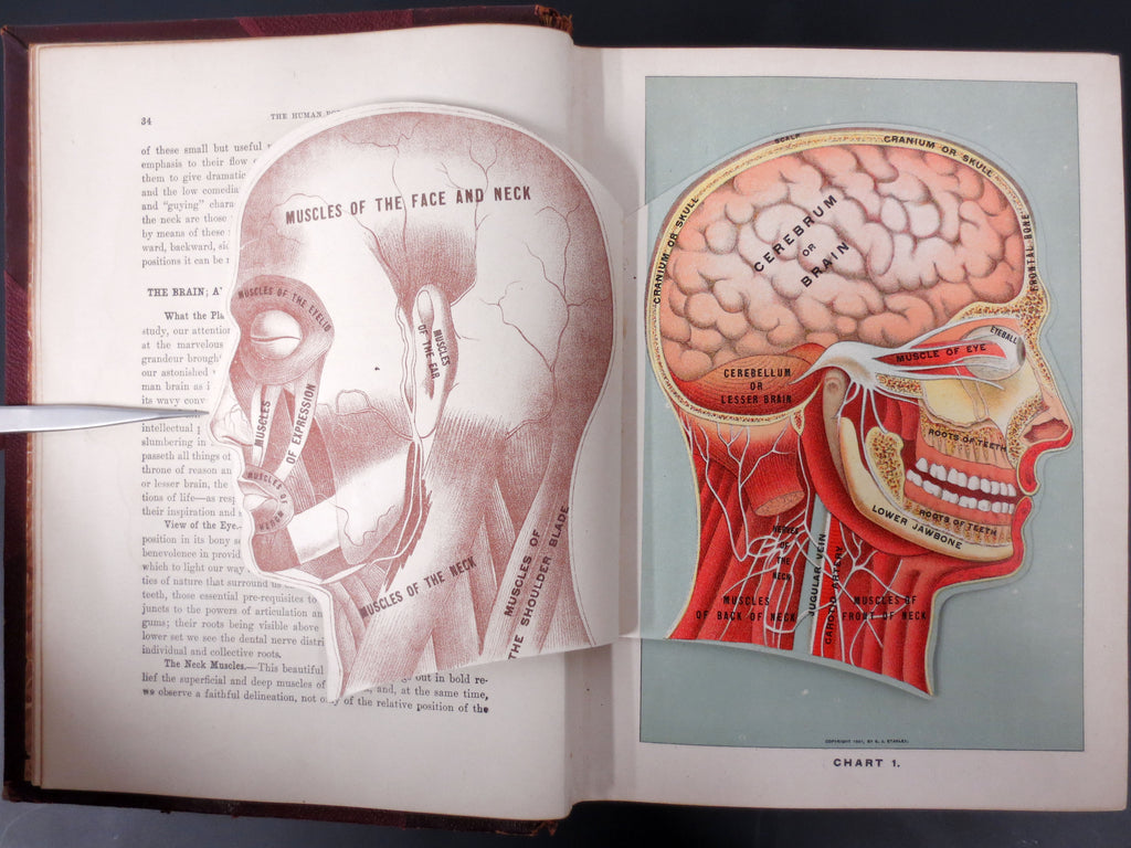 Antique Medical Book 1903, Medicology Encyclopedia, Illustrated Unfolding Plates