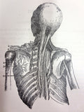 Antique Book 1890 Anatomy Atlas with 135 Engravings, Doctor A. Prodhomme
