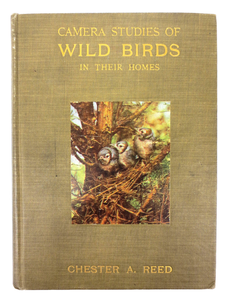Antique 1911 Wild Birds Book Chester Albert Reed Ornithologist 200 Illustrations