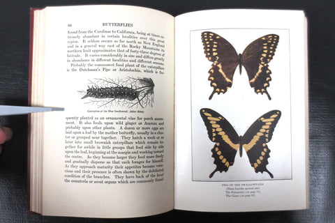 Antique 1917 Butterflies Worth Knowing Book by Clarence Weed, 32 Color Plates