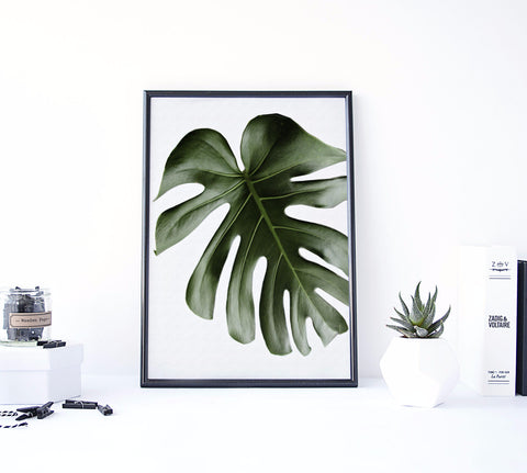 MONSTERA II