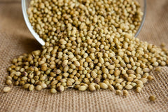 Corrianda Seeds 1Kg