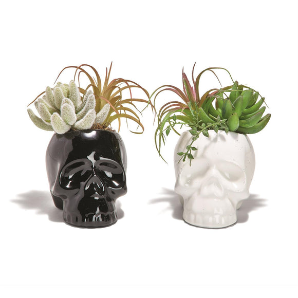 Last Call Skull Planter [2 Colors]