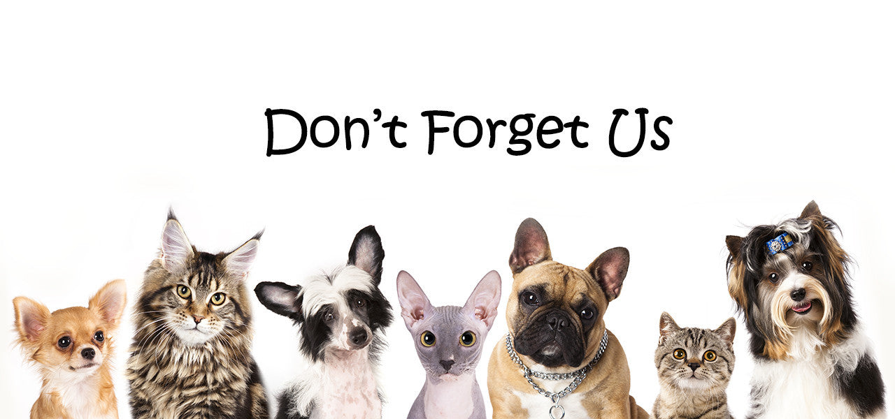 Don't forget the pets! Inexpensive options for our furry friends. Pet arrangements for dogs & cats. Catnip and kitty toys, dog bones and chew toys.