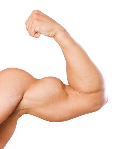 Weight Free Arm Muscle Exercises