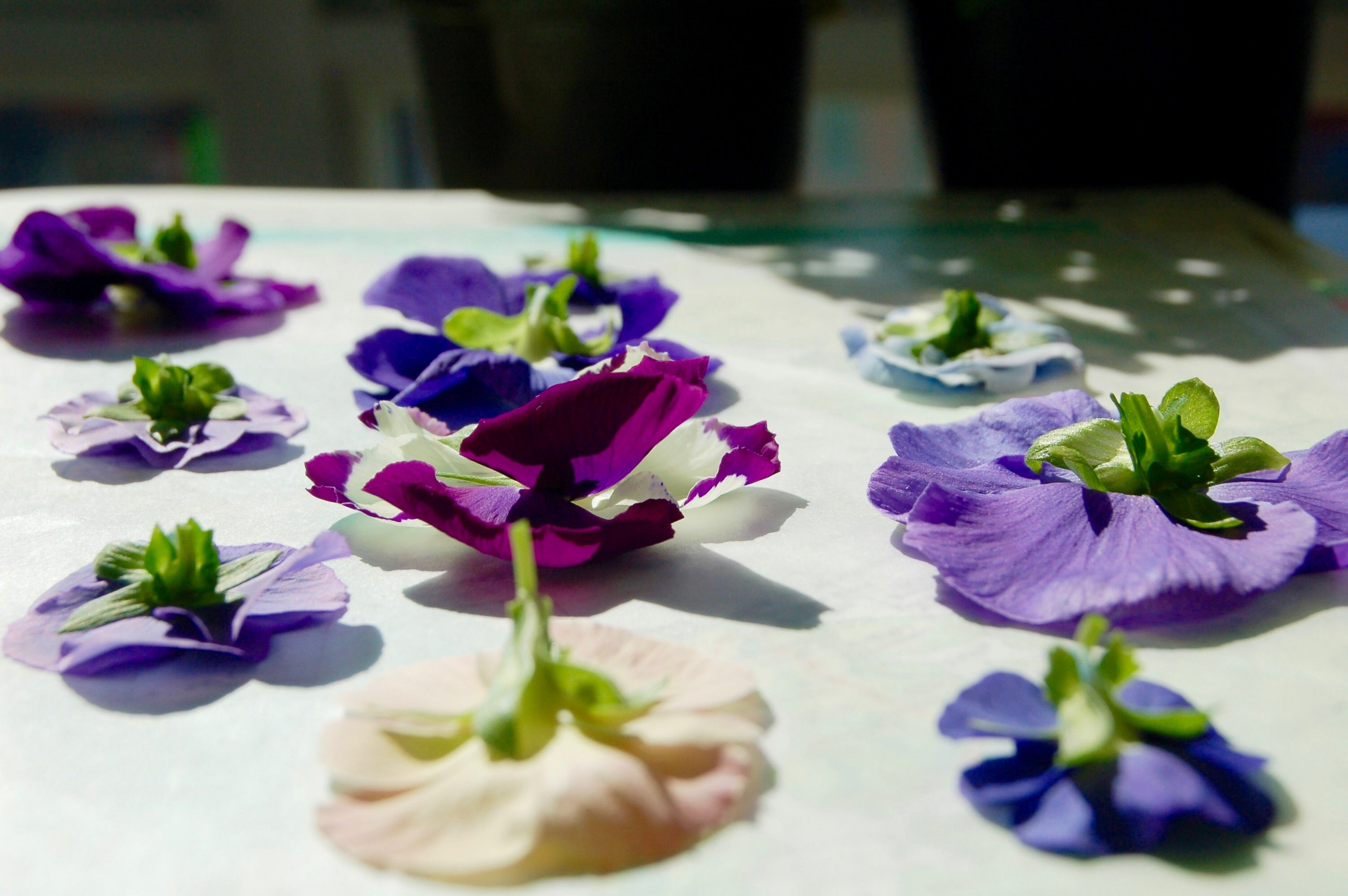 pressing the flowers