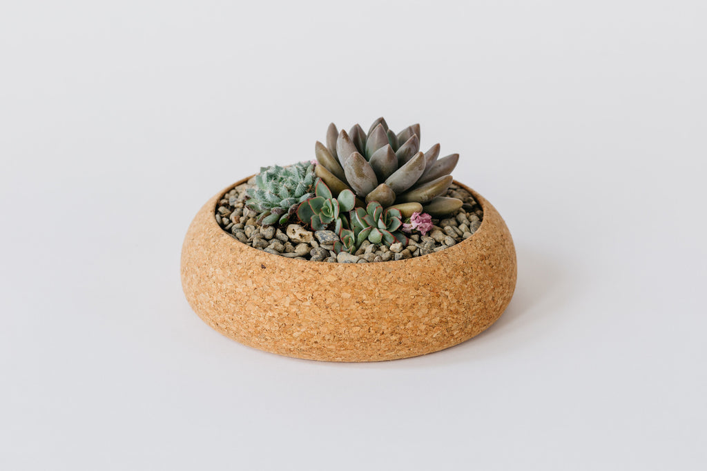 Large Cork Planter ---
