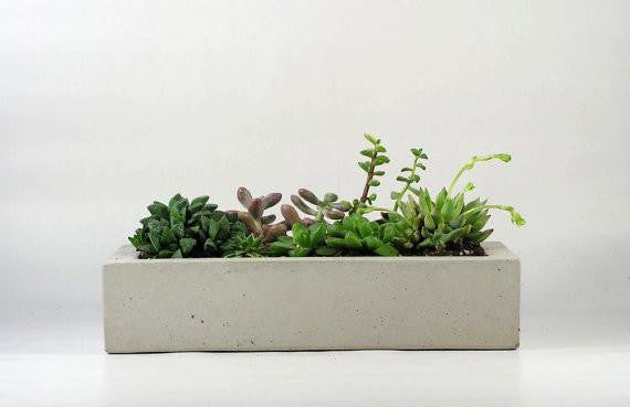Concrete Tray / Planter (More colors)