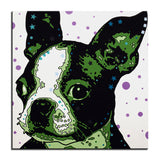 Boston Terrier Multi Color Canvas Picture