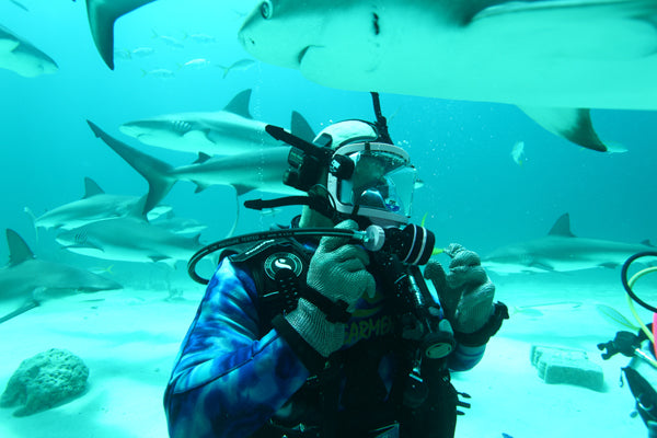 Shark Diving in the Florida Keys