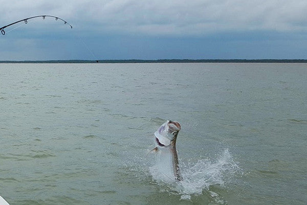 Tarpon Season in Full Swing