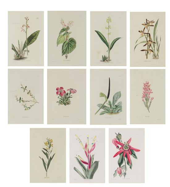 Set of Eleven Botanical Prints after George Cook