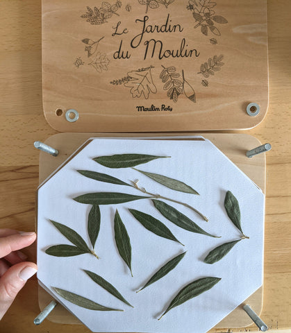 pressed olive leaves by Wild Blue Yonder Wood Jewelry