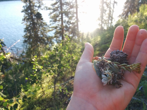 Hand holding little bits of lichen, moss, bark from Whitehorse, Yukon