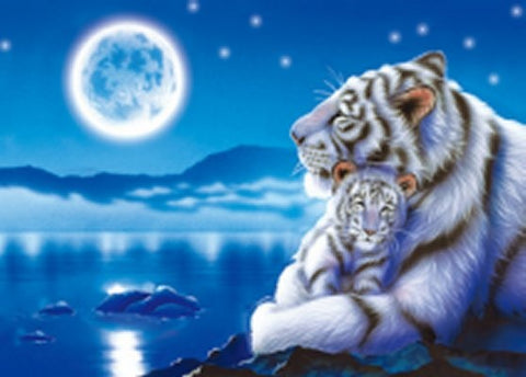 "3D White Tiger Picture 9.75""x 13.75"""