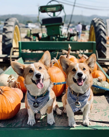 Tractor dogs