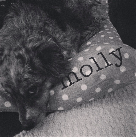 custom embroidery with your dog's name