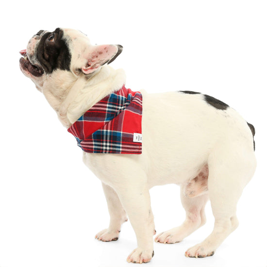 Berkshire Plaid Flannel Dog Bandana from The Foggy Dog